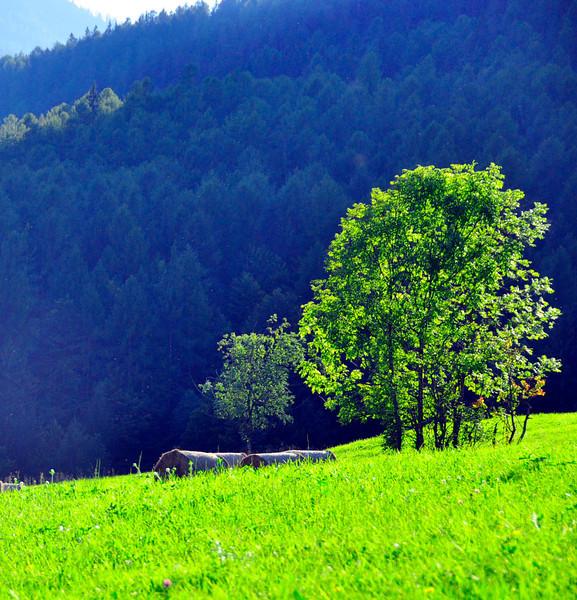 Cortina walk