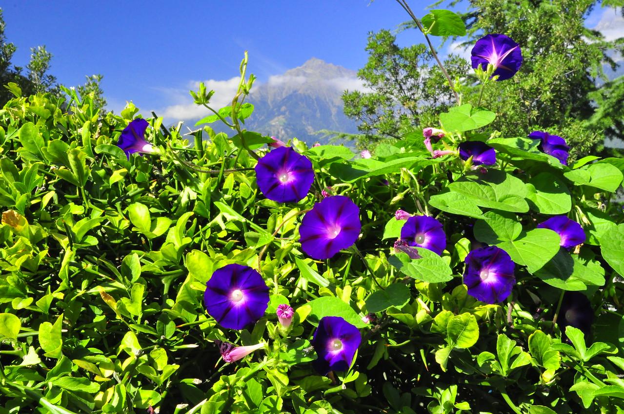 on the garden walk above Merano