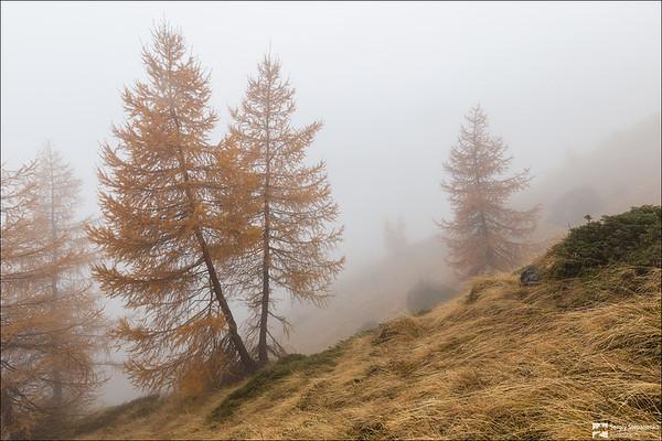 In the Fog | В тумане
