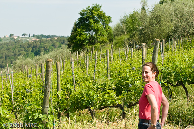 In the vineyards of i Greppi di Silli