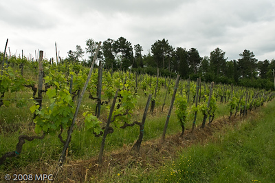 Newer grapevines