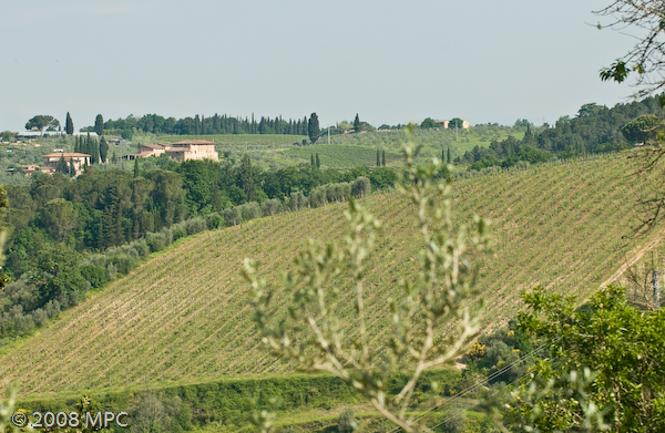 The newest vineyards of i Greppi di Silli