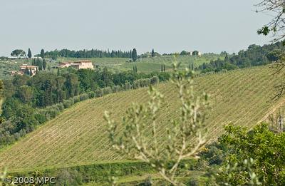 The newest vineyards of i Greppi di Silli