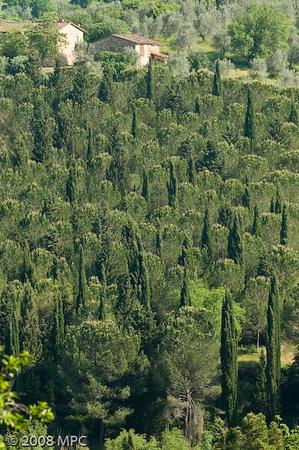 The surrounding hillside