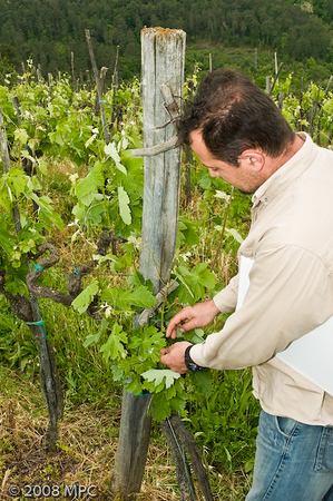 Newer vines