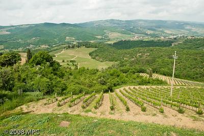The vineyards of Podere Poggio Scalette