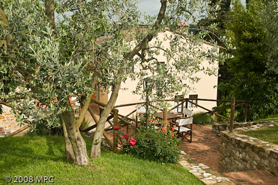 The olive trees and agriturismo in the background