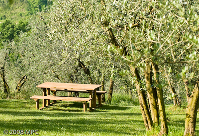 Picnic area and olive trees