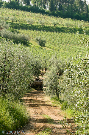 the vineyards at the agriturismo