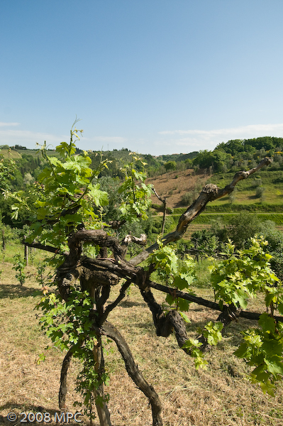 In the vineyards of the agriturismo