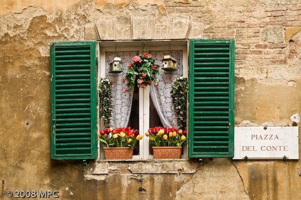 Window box in Siena