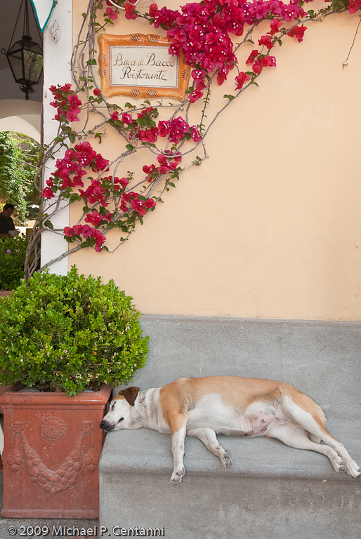 Sleeping dog in Positano