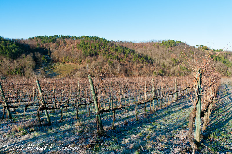 The vineyards at i Greppi di Silli