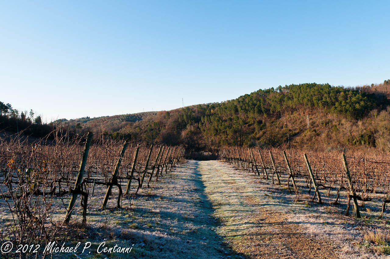 The vineyards at i Greppi di Silli