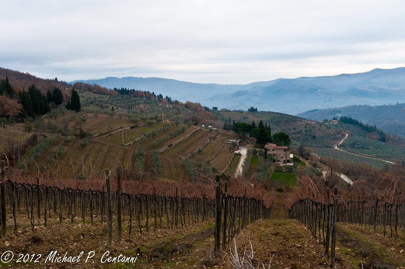 Vineyards at i Greppi di Silli
