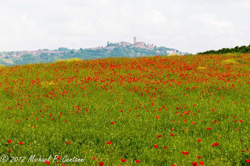 Poppy Field near Bricco dei Cogni