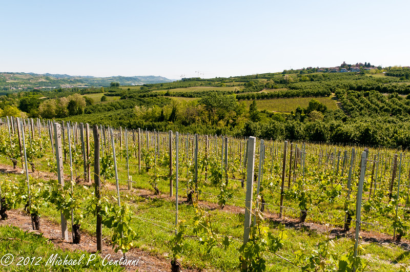 Vineyards across the street