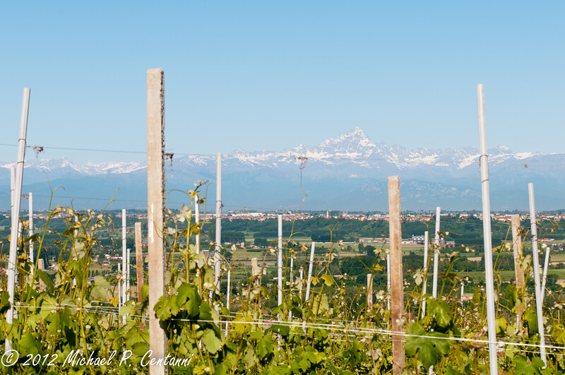 Vineyards and the Italian Alps