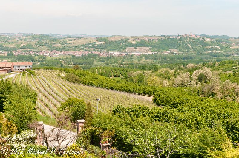 the vineyards across the street