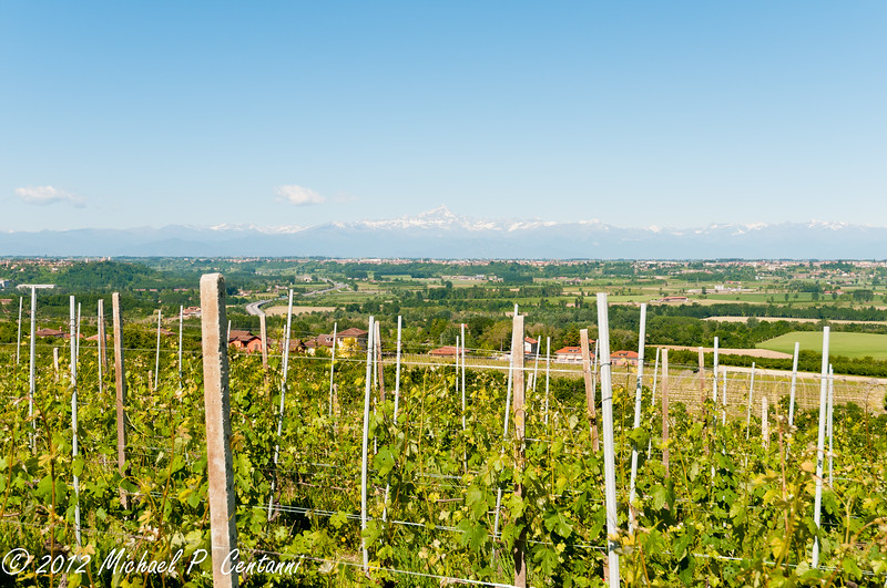 Vineyards near Bricco dei Cogni