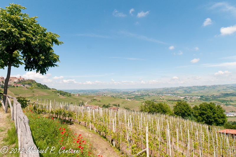 The vineyards around La Morra