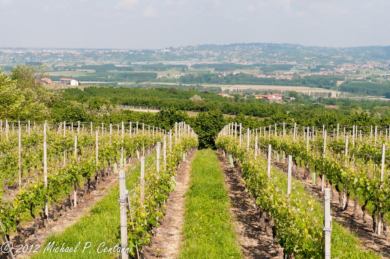 the vineyards around Verduno