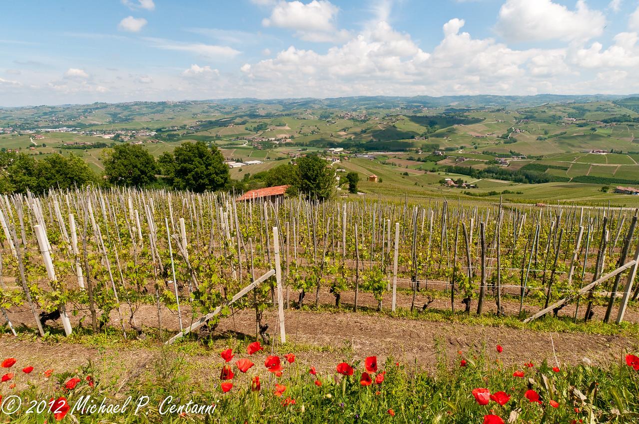 The vineyards around La Morra