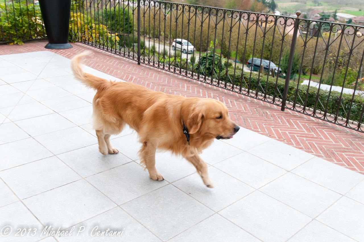 Cantina dog - Manny!