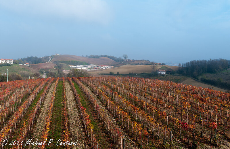 The vineyards around Conterno Fantino
