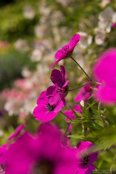 Villa Carlotta Flower Garden