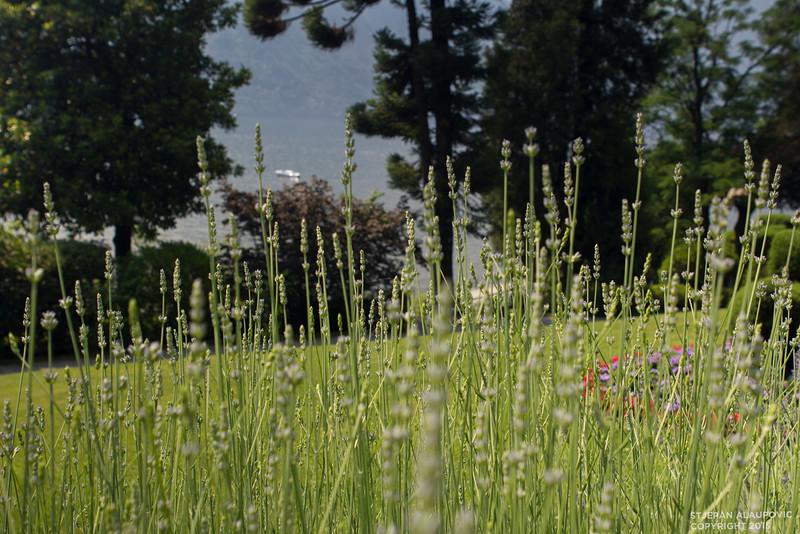 Fields in Villa Carlotta