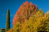 Fall foliage color near the Lake Como village of Cadenabbia, Lombardy, Italy, Europe.