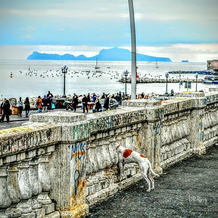 """""""A Tail Waggin' View"""" - Bay of Naples"""