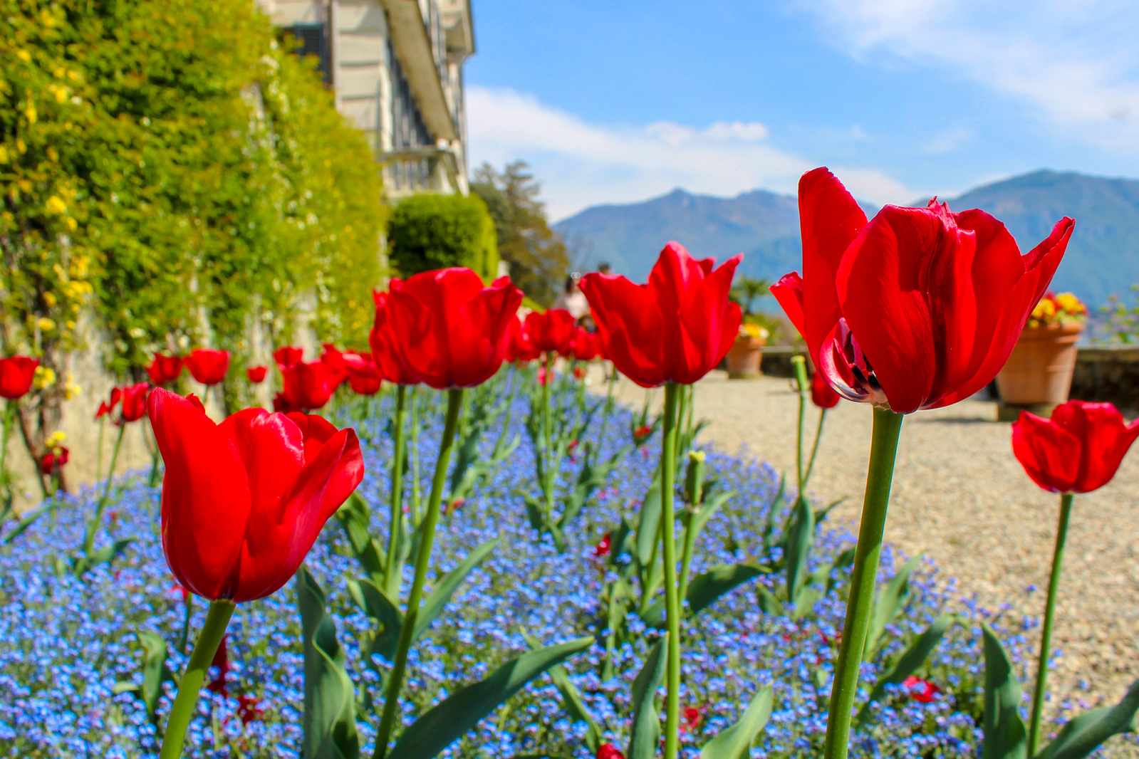 take a como day trip from milan and see gorgeous flowers everywhere