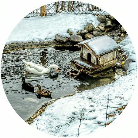 """Duck Pond"" - Ortisei"