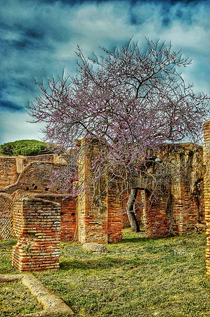 """Cities Fade, Life Renews"" - Ostia Antica, Italia"