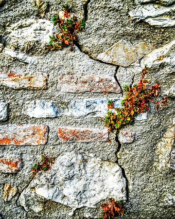 """""""Life in the Cracks"""" - Ostia Antica"""