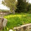 Palermo_2013 04_4496220