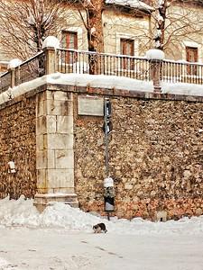 """Soft Paws on Soft Snow"" - Pescasseroli, Italia"