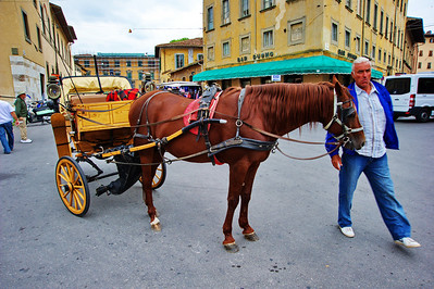Pisa_Horse+Carriage+driver_D3S0274