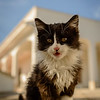 Guard Kitten