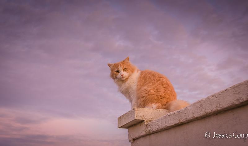 Espressino Overlooking His Kingdom
