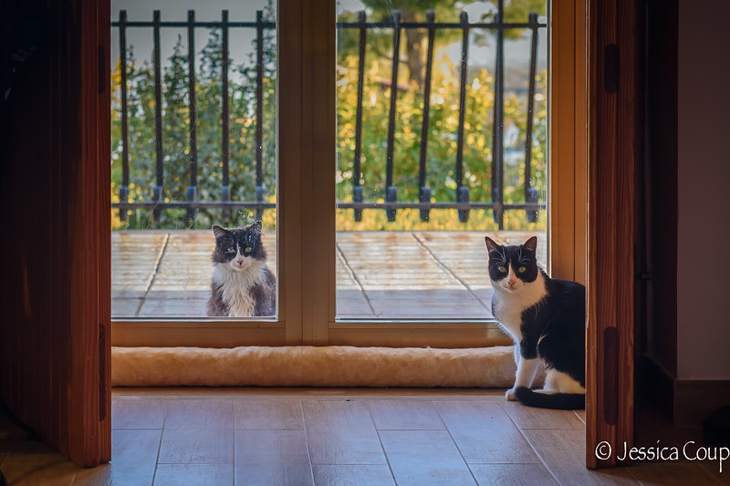 Indoor Cat Wants Out and the Outdoor Cat Wants In