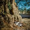 Olive Tree Nook