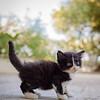 Scaredy Kitten