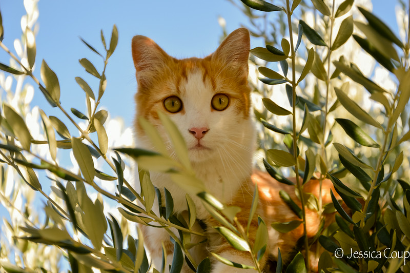 In the Olive Tree