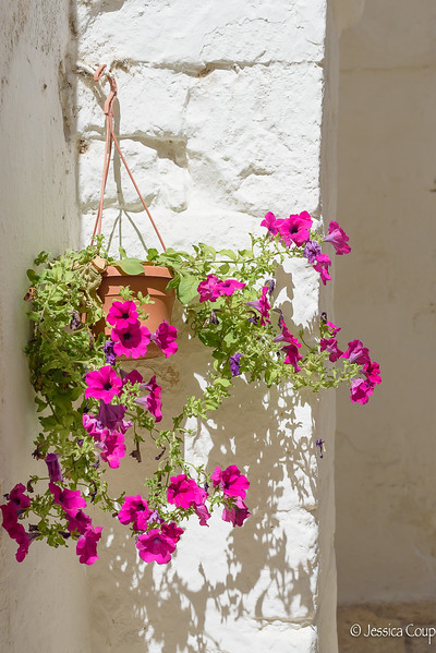 Petunias Hanging on the Town Wall