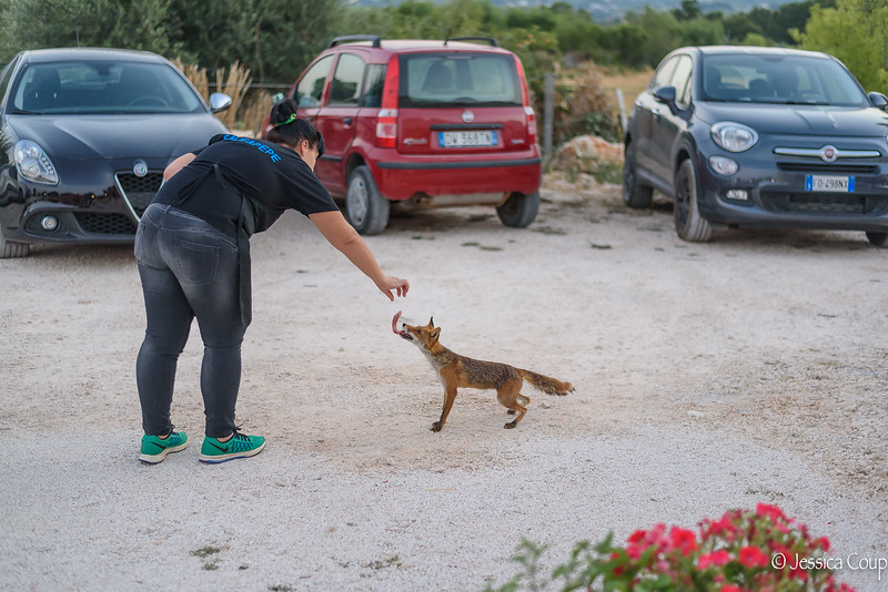 Feeding the Fox at Sale & Pepe