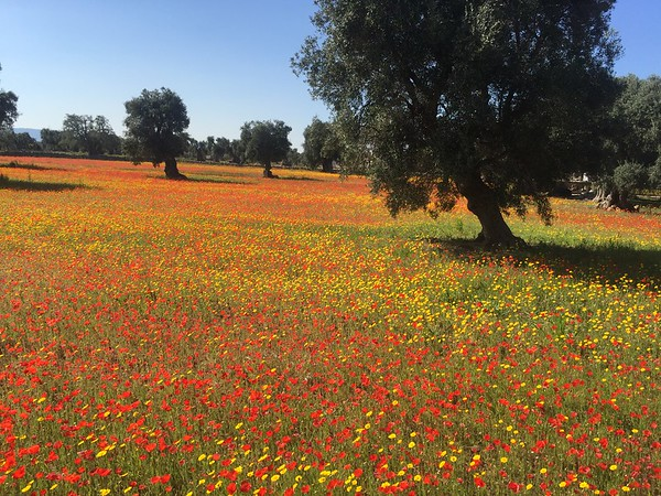 Puglia Luxury: April 9th, 2017