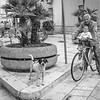 Bikes and Dog